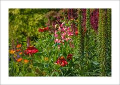 The Long Border (prendergasttony) Tags: designers tonyprendergast nikon d7200 flowers colour green nature rustic jekyll lutyens border bees reds orange pink mauve longborder