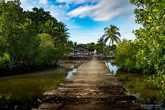 Across (Silver_63) Tags: meosmansar papuabarat indonesia papua foresta giungla