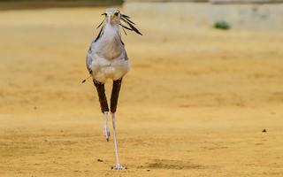 Bird - 5646