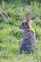 Peter Rabbit (digiphill) Tags: 2018 allendale allenheads august eastallen northeast northpenninesaonb northumberland rabbit sigma150600mmsport summer mammal beautifulearth