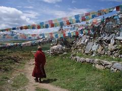 Tibetan Monk (Wolfgang Bazer) Tags: ganden sumtseling monastery songtsenling དགའ་ལྡན་སུམ་རྩེན་གླིང 噶丹松赞林寺 songzanlin lamasery monk mönch yellow hat sect tibetan buddhism gelukpa order dalai lama zhongdian shangrila yunnan china gebetsfahnen prayer flags