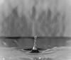 Dripping (NIKON 505) Tags: water dripping splash black white monochrome lightroom nikon d610 full frame cropped image flashpoint zoom r2 tt685n