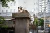 猫 (23fumi@fuyunofumi) Tags: ilce7rm3 sony 55mm sonnartfe55mmf18za sel55f18z cat chat katze neko miyazaki alley bokeh ねこ 猫 sonnar street