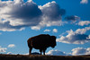 _MG_2866 - On the plains of South Dakota.   ©Jerry Mercier (j. mercier) Tags: nature southdakota jerrymercier mercier beauty beautiful clouds cloud skies sky prairie plains landscape landscapes outdoors outside outdoor scenic west canon photography bison buffalo bisonbison bosbison cow silhouette cumulus animal wildlife windcavenationalpark blue white
