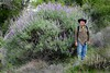 Very large Lupinus albifrons, BUSH LUPINE (openspacer) Tags: bushlupine eric fabaceae lospadresnationalforest lupinus montereycounty people