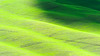 Oil slick (SLpixeLS) Tags: italy italie tuscany toscane toscana landscape paysage soil agriculture design abstract texture ondulation undulation wave vagues art minimal minimalism green vert shadow ombre