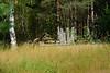DSC_9533 (sevbette) Tags: лес осень