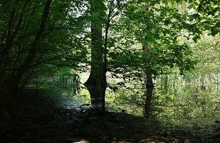 forest in April