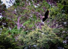 Lake Seminole Park Florida (dmg_rockroach) Tags: wildlife florida seminole park lake canon canon7d 7d eos tamron
