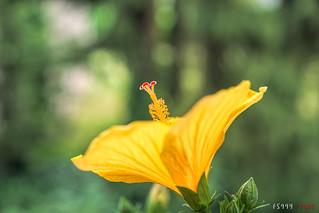 Yellow Antenna
