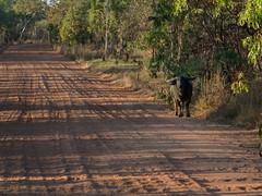23-Kakadu-Jim Jim Falls (gosiaplus) Tags: 2018 day13 nt