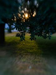 Evening (Birgit F) Tags: 2018 july2018 lensbaby norway olympusem10 sol22 creativeaperture micro43 mirrorless oly olympusemdmd10 photobirgitfostervold prototype seeinanewway testing m43