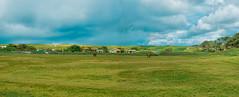 paisaje (Isai Hernandez) Tags: landscape naturephotography nature beautiful nice nikon sky storm horses colors photoshooting photographer panoramic
