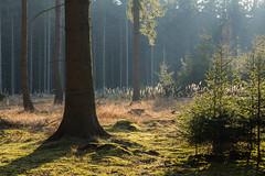 Serenity (Petr Sýkora) Tags: les mech rostlina výlet nature forest sunset serene czech