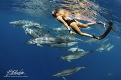 Beauty and her Besties (bodiver) Tags: hawaii snorkeling wideangle ambientlight dolphins peopleunderwater reflection keauhou fins