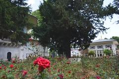 Topkapi palace gardens - Istanbul (Saf') Tags: topkapi palace turkey istanbul constantinople gardens ottomanarchitecture ottoman rose turkiye