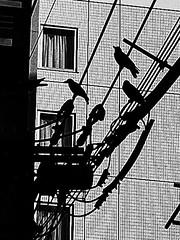 Street Fragments #404 - FUKUOKA Day and Night (Yoshi T. (kagirohi)) Tags: japan japanese fukuoka blackwhite bw street streetphotograph streetphotography alley fragment urban city cityscape snapshot ricoh gr ricohgr 日本 福岡 白黒 モノクローム モノクロ 路上 ストリート ストリートフォト 都市 風景 都市風景 スナップ スナップ写真 リコー 断片 blackandwhite monochrome depthoffield
