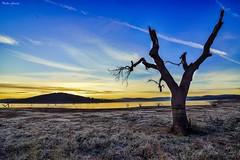 Winter life (Peideluo) Tags: sunset blue tree nature landscape clouds water sunrise beautiful lake dramatic sky árbol cielo paisaje campo