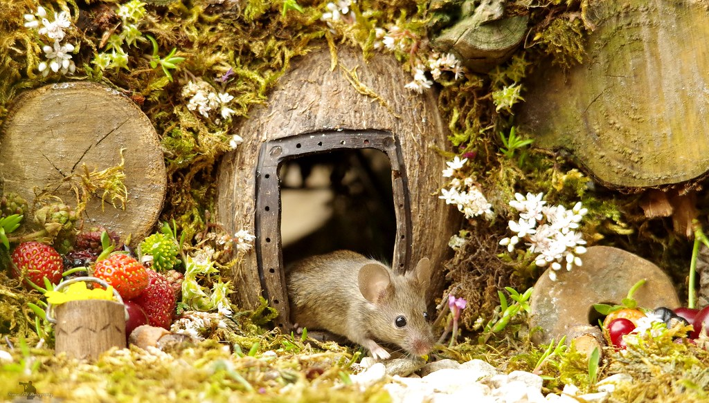 Image result for man spots a family of mice in his garden miniature village