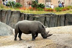 IMG_0781 (Bob_lewerissa) Tags: wildlands emmen zoo canon 80d 70200 l nonis usm