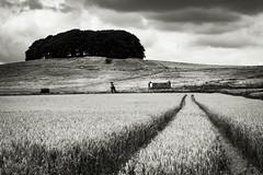 Furze Knoll/Morgan's Hill (Paul Timlett) Tags: wood trees downland landscape monochrome furzehill wiltshire bnw farmland outdoors nikond810 hills barn downs blackwhite