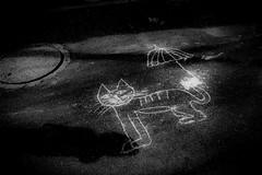 Cats are also hot 705 (soyokazeojisan) Tags: japan osaka light street city bw shadow blackandwhite monochrome analog olympus m1 om1 28mm film trix kodak memories 昭和 1970s 1975 cat