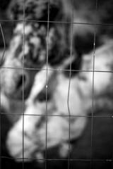 *** (Misha Sokolnikov) Tags: horse horses light shadow barbedwire fence blackandwhite noiretblanc leica leicamonochrom leicamm leicamsystem leicacamera 50mm aposummicron