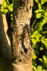 180810 Yakushiike Park-02.jpg (Bruce Batten) Tags: animals arthropods honshu insects invertebrates japan machida parks plants reflections shadows tokyo trees yakushiike