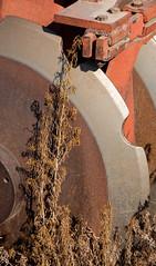 Disk Blade (maberto) Tags: cali california d7200 farmington nikon corn farm tractor ©bradmaberto disk weeds