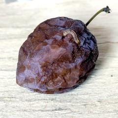 Natura morta (Pioppo67) Tags: canon 80d macromondays decay food sigma105mm macro