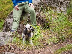 jasper 2017 050 (adamlucienroy) Tags: jasper jaspernationalpark nationalpark forest gh4 panasonic telephoto leica primelens prime 25mm f14 alberta edmonton yeg yegdt canada