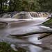 Morrinsville river walk (jasonpope2) Tags: new zealand waikato water bush trees