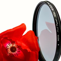MM Photography Gear. Does a poppy need a filter? (Different Aspects) Tags: macromondays photographygear filter poppy red