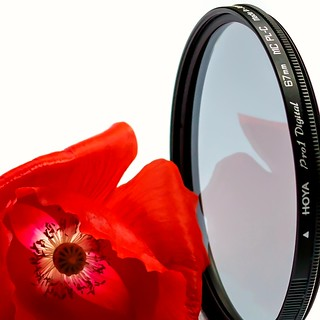 MM Photography Gear. Does a poppy need a filter?