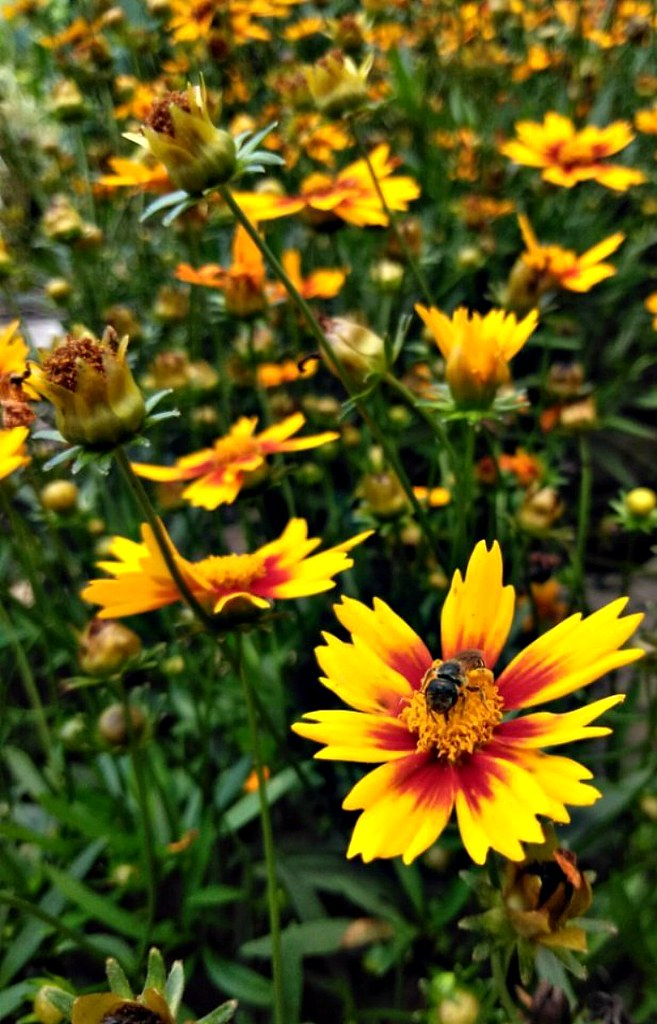 The worlds most recently posted photos of flowers and lowes bee happy dave seven one tags bee bees flowers orange lowes mightylinksfo