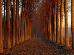 Woods (Robyn Hooz) Tags: trees sunrise pattern foglie leaves luce wood legno tronchi sun alba red rosso path percorso natura campagna