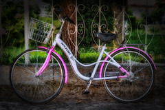 Bicycle dream (Leaning Ladder) Tags: shkoder albania bicycle pink colors canon 7dmkii leaningladder