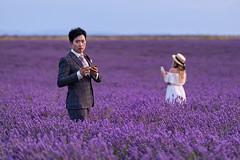Elegance, lavender and...smartphone (marypink) Tags: provenza provence france francia lavanda lavender plateaudevalensole field campo fioritura sky nikond800 nikkor70200f28
