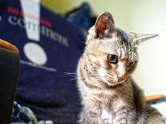 Bill the girl (Steve only) Tags: olympus pen ep5 mzuiko digital 17mm 118 f18 1718 cats bill