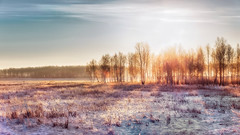 Everything is quiet (Alexander Tumashov) Tags: forest frost sun ray blinding birch sunrise landscape russia countryside nature freshness