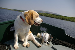 Boating with Buster Front Cover Image Eleven (alison alderton) Tags: buster dog barge boat lily hound ireland lough allen boating