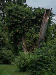P7300861 (Copy) (pandjt) Tags: binghamtonny binghamton ny travelogue cutlerbotanicgarden garden scenicgarden cutlergarden botanicgarden