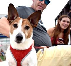 Photogenic scouse pup #2 (Ste Owens) Tags: liverpool albertdock mersey merseyside rivermersey dog pup