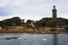 DSC02297-1_1 (alavrsen) Tags: hirsholmene denmark island nature sanctuary protedted sea seascape stones landscape rocks birds wildlife wildnature vegetation boat frederikshavn