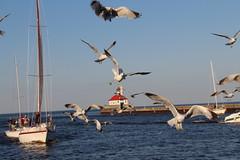 The Seagulls Cometh (lars hammar) Tags: duluth minnesota birds boat lighthouse