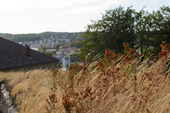 Tørken 2018 (KOKONIS) Tags: gress nikon d600 scandinavia skandinavia europe europa grass halden østfold norge norway