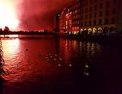 Fireworks on the lake #lake#geneva#nofilters#fireworks#swan#switzerland (LadyliCrow) Tags: nofilters geneva swan switzerland fireworks lake
