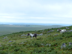 Climbing To The Top (Marit Buelens) Tags: horses ponies ferns hill roughtor england cornwall walking hiking weather bodminmoor