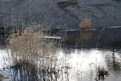 (liisatuulia) Tags: bylandet porkkala kallio kivi meri saaristo archipelago sea