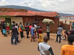 ROA's elephant shrew (kuremarwanda) Tags: shrew streetart rwanda roainrw roa roaartist kuremakurebakwiga kigali nyamirambo mural elephantshrew